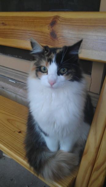 Shaunee, the evil kitten