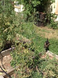 ESP among the tomatoes.