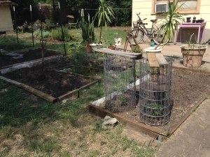 Pepper plants and back yard beds.