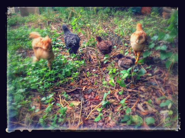 The chicks! (l-r: Lion, Skunk, Bear, Panther, Chef Vordevask, and in the upper right corner, being her usual loner self, Plovatro a.k.a. Hawk)