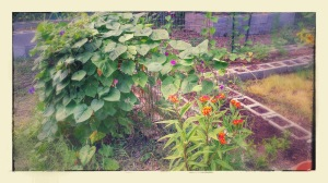 Morning Glory and Milkweed