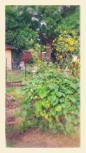 Gardens 7/31/2015
