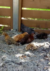 Dust Bathing