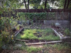 Moon Garden: 8/14/2015