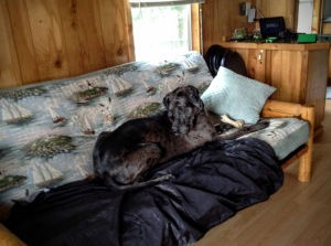 Lulu makes herself at home at Sagadahoc Bay Campground